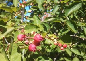 ServiceBerries